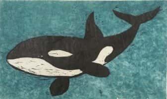 Orca | Bjørn Kaaks