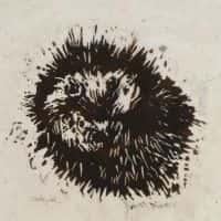 Pinnsvin | Bjørn Kaaks